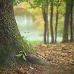 Przepiękny i {miły dla oczu zieleniec to nie lada wyzwanie, szczególnie jak jego pielęgnacją zajmujemy się sami.